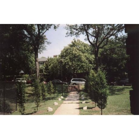 Дерево в г.Вашингтон (США, 2004)