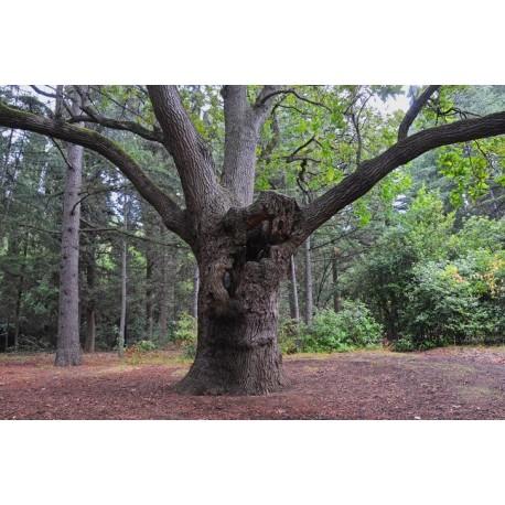 Дерево, Республика Крым (Россия)