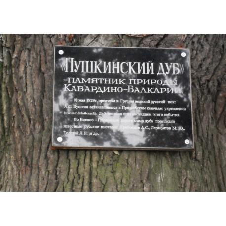 Пушкинский дуб, Кабардино-Балкария (Россия)